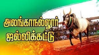 Download 🔴LIVE: அலங்காநல்லூர் ஜல்லிக்கட்டு சிறப்பு நேரலை | Alanganallur Jallikattu 2020 Live | Jallikkattu Video