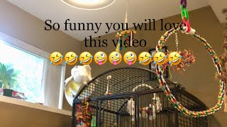 Download Look how Joseph playing with the Chicken :)) Sooo Funny 🤣🤣🤣 Video