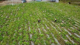 Download 나는 농부다 67회 1부 - 해남에 살으리랏다Ⅰ Video