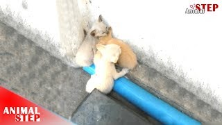 Download Stray Kittens Meowing Behind a Store Waiting for Help Video