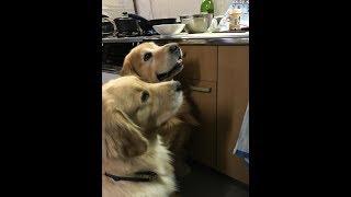 Download 鹿肉を生で犬に与えると良いらしいので、まず私が食べてみました Video