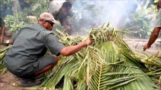 Download How To Cook Food Undergound - Fiji Lovo, South Pacific Video