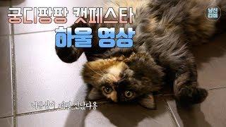 Download [하울]수의사는 캣페어에서 뭘 살까? Video