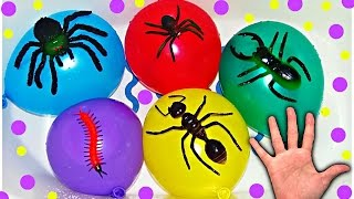 Download Mega Wet Balloons with Insects for Learning Colors - Finger Nursery Rhymes For Babies Video