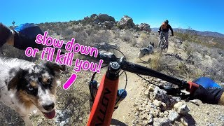 Download This trail dog is gonna eat me | Mountain Biking in Beatty, Nevada Video
