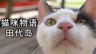 Download 这座岛上猫比人还多,简直是天堂鸭! 《猫咪物语》田代岛(上篇) Video