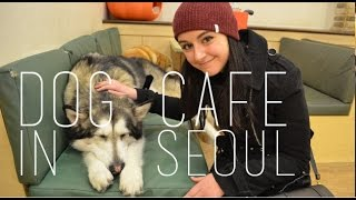 Download Visiting a Dog Cafe in Seoul Video