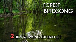 Download Forest Birdsong - Relaxing Nature Sounds - Birds Chirping - REALTIME - NO LOOP - 2 Hours - HD 1080p Video