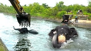 Download A dam tried to swallow an elephant, humans said otherwise Video