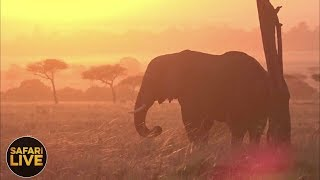 Download safariLIVE - Sunrise Safari - September 8, 2018 Video