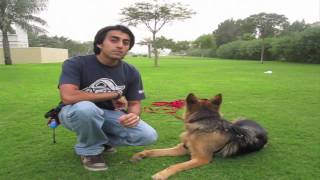 Download How to teach ANY dog to Come when called! Video