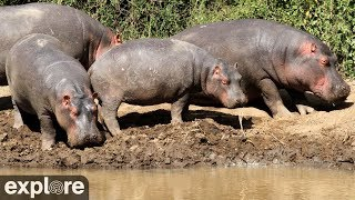 Download African Watering Hole powered by Explore.org Video