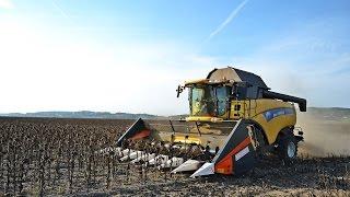 Download sklizeň slunečnice New Holland CX8080 Video