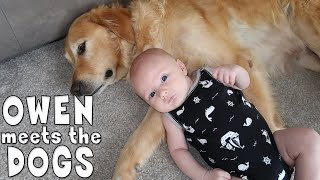 Download Baby Owen Reacts to Meeting Our Dogs Video
