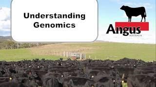 Download Angus 2016 Regional Forums - Understanding Genomics Video