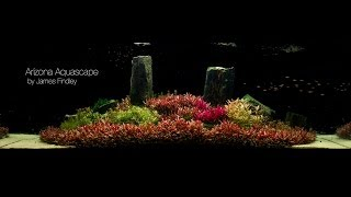 Download Arizona Aquascape by James Findley (1600 Litre) The Making Of Video