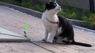 Download 동물농장-고전 혼자보기 아까운 웃긴 동영상! Video