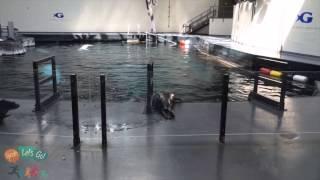 Download Behind the Scenes Tour at Georgia Aquarium Video