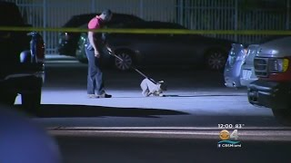 Download Lauderhill Cop Shot, Killed Dog Attacking Woman In Apartment Video