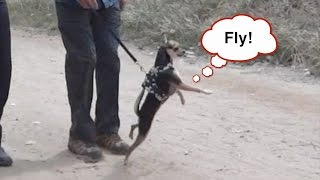 Download Bushman Prank on Dogs! Scaring Dogs! Video