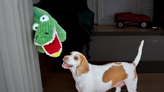 Download Dog vs. Annoying Alligator Puppet: Cute Dog Maymo Video
