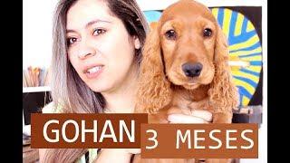 Download Gohan :: 3 Meses do Meu Cocker Spaniel Inglês Video