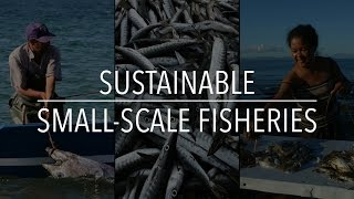 Download FAO Policy Series: Sustainable Small-Scale Fisheries Video