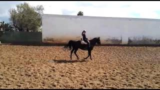 Download EGIPCIO - Andalusian gelding suitable for children also side saddle - For Sale - TBSH Video