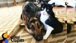 Download Cat's Baby Brother Is A Big Dog — And They're Best Friends - ALVIN & BARON | The Dodo Odd Couples Video