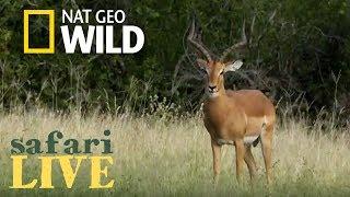 Download WATCH NOW: Safari Live   Nat Geo WILD Video