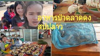 Download เลาะตลาดดงเบิ่งอาหารป่าเมืองไชพูทองแขวงสะหวันนะเขต ເລາະຕະຫຼາດດົງເມືອງໄຊພູທອງ Video
