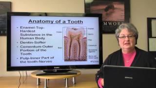 Download Basic Dental Terminology Video