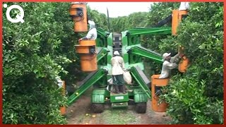 Download Modern Agriculture Machines That Are At Another Level Video