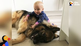 Download Big Dog Loves His Little Baby Girl | The Dodo Video