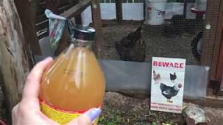 Download Apple Cider Vinegar (ACV) and Your Backyard Chickens Video