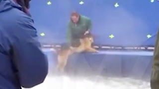 Download Animal Abuse On ″A Dog's Purpose″ Set? (VIDEO) Video