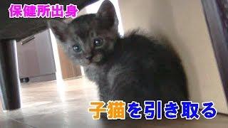Download 【File.1】保健所から子猫を引き取りました Video