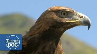 Download Aguila Real | Documental HD Video