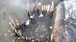 Download Fish Trap (Fish caught on Camera) Video