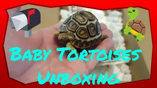 Download Unboxing Some Rare Turtles and Tortoise Video