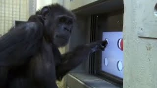 Download Touch Screen Test - Chimp TV - BBC Video