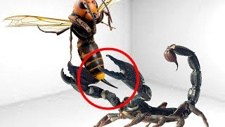 Download 5 CRAZIEST Insects Fights Caught On Camera Video