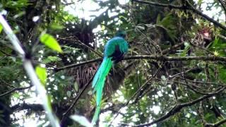 Download Birds of northern Nicaragua Video