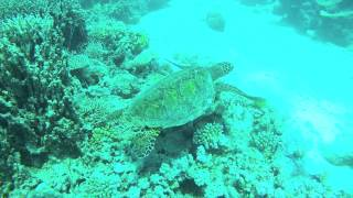 Download 1 Minute Video of The Great Barrier Reef Video