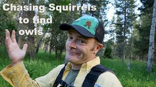 Download Chasing Squirrels to Find Owls? - A Bird Photography vlog Video