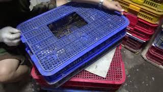 Download Ngành nghề nuôi tắc kè có đầu ra tại Bắc Ninh Video