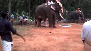 Download Chulli parambil @ pothozhi pooram Video