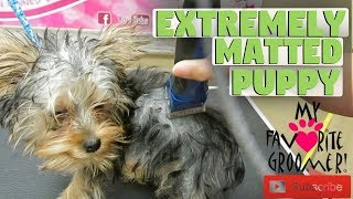 Download This Happens When Your Puppy Gets Matted Video