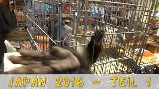 Download Reptil TV - Folge 87 - Roadtrip nach Japan 2016 Video