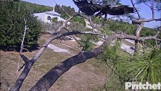 Download SWFL Eagles ~ New Lessons For E9: Sticks Are Not Just For Rails 3.18.17 Video